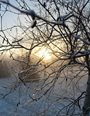 Photograph of icy twigs outlined by golden wintry light.