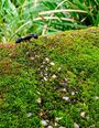 black perl ant on moss_listing