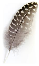 Spotted Feather