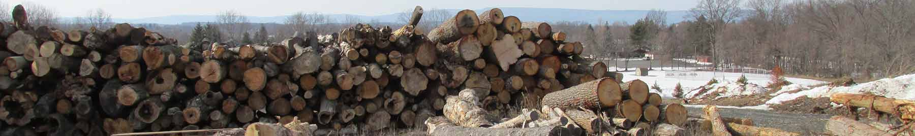 stack of large logs