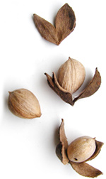 three light brown hickory nuts