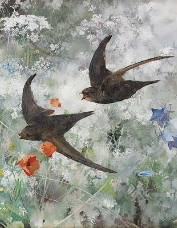 swallows flying low over a summer fiield